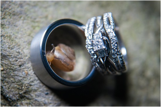 ring photo bug